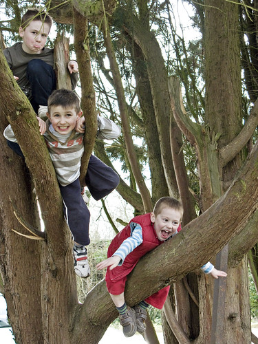 Raffy, Monty and Milo climbing trees in Fordwich, March 2009