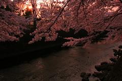 町田樹 画像85
