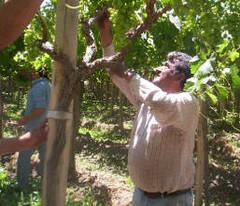 Programa de capacitación: Hacer vino artesanal, más que un hobby