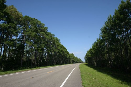 Lovely pine tree forest cycling...