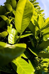 garden_2june2009_1857 (patrick h. lauke) Tags: plants plant garden fisheye salford zenitar pendlebury zenitarfisheye zenitar16mmf28