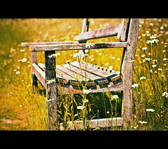~ Old And Broken Bench~ (Seat) (Komatoes) Tags: old flowers grass bench out 50mm weeds nikon seat explore forgotten worn 103 oldbench brokenbench d40 picturesocial 247bokehlife