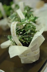 Potted plant (The Weddings Page) Tags: green favour