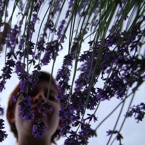 hello Lavender!
