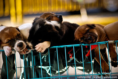 Puppies (Reyne Villena) Tags: dogs puppies cebu cebucity urbanphotography cebusugbo nikond60 teampilipinas worldofanimals streetwalkphotography