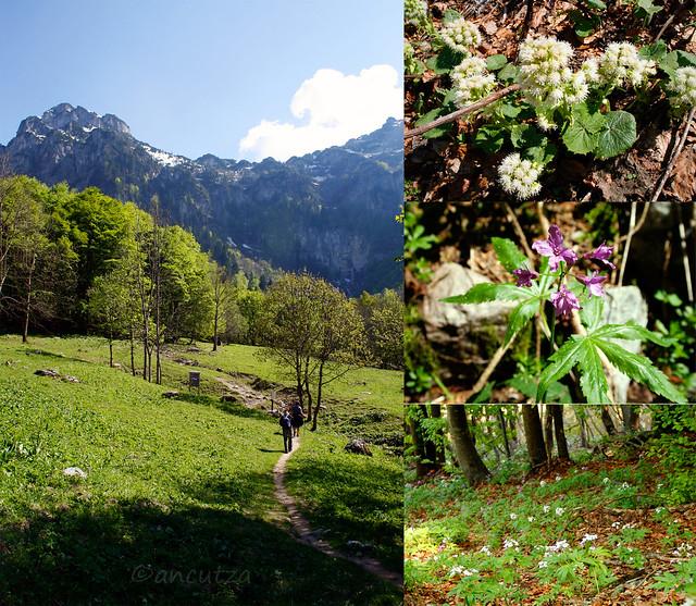 foto Escursione Pis del Pesio