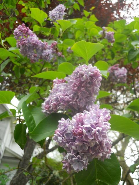 spring2011 285