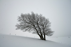 in the wind (crazyhorse_mk) Tags: winter mountain snow cold tree nature canon germany landscape frozen wind lonely baden schwarzwald blackforest soundtrack beech schauinsland badenwuerttemberg fototour sigma1020 soundtracked eos400d hofsgrund klaiber stohren windbeech andywon ketilbjoernstad theseaii