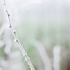 10 365 - For Lauren (Ly (Lyanne Wylde Photography)) Tags: morning winter square 50mm frost bokeh smooth peanutlauren 10jan09