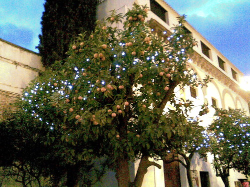Christmas lights on an orange tree