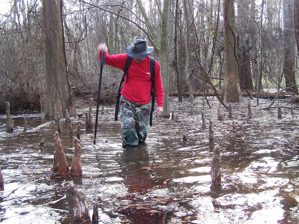 Swamp Stomp: Up to His Knees in Knees