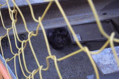 Today's Cat@20090218