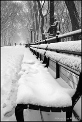 A snowy day in the park (Natasja ) Tags: park new york city nyc newyorkcity winter blackandwhite bw usa white snow ny newyork black america canon bench eos december manhattan central frame snowing firstsnow zwart wit snowscene thebigapple 40d canoneos40d centrappark
