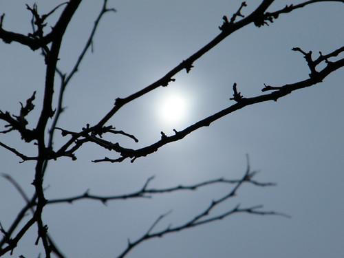 74:365 Spring sun