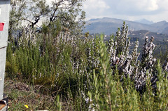 ruche olivier montagne
