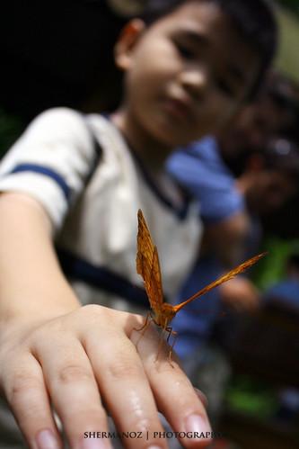 Shermanoz - Butterfly Boy