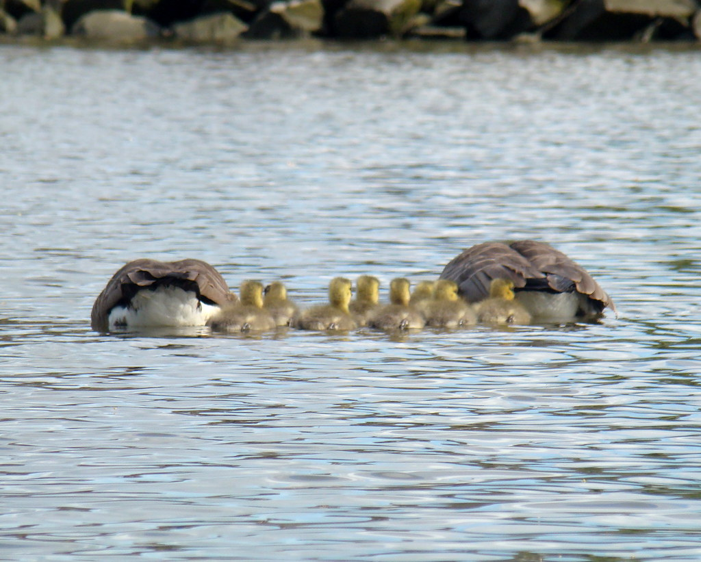 2009-05-03 Portage Inlet 180