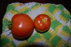 First RIPE Tomatos!