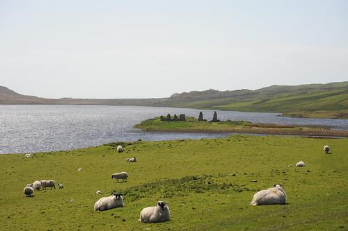 遺跡の前の羊達