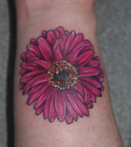 Gerbera Daisy Wrist Shot Close up!