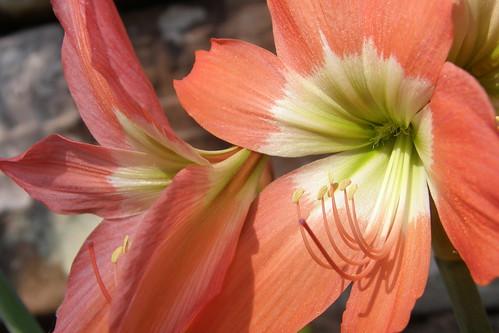 046.迎著陽光挺立的花朵 (3)_特寫
