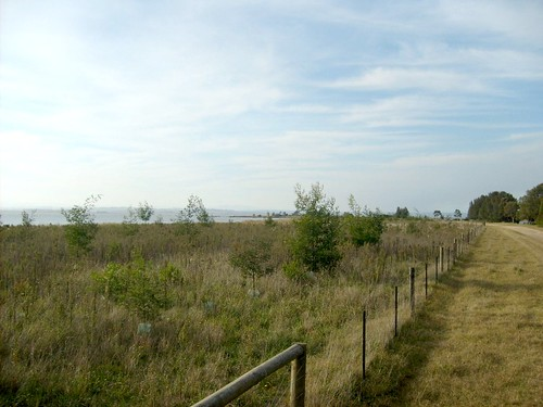looking east to plantings from 2008