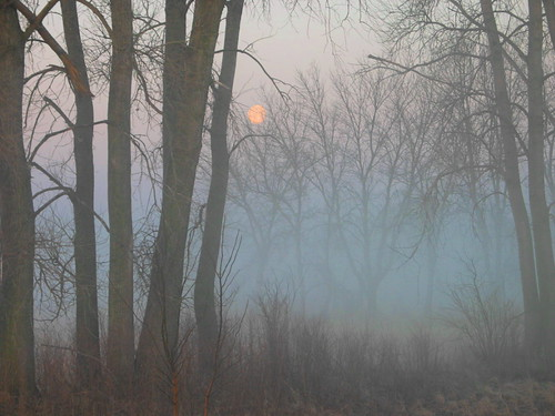 moon in the mist