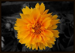 smile (Gdnght1) Tags: flower macro yellow selectivecoloring