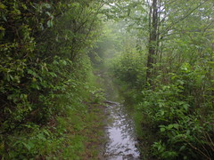 15 - Ivestor Gap Trail 1