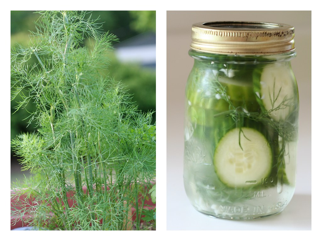 dill & pickles