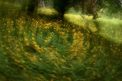 Mount Tabor (Tony Pulokas) Tags: blur flower oregon portland spring motionblur camerashake mounttabor intentionalcameramovement