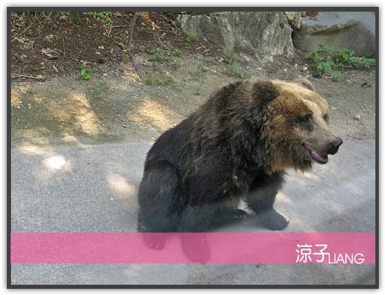 愛寶樂園(動物篇)10