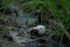 forgotten snail (Matevz Umbreht) Tags: red summer house plant blur flower macro green nature floral beauty grass yellow garden bokeh vrt background snail makro ozadje rumeno rastline pol rdee hika
