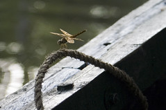 dragonfly (damnsalentino) Tags: fotografinewitaliangeneration