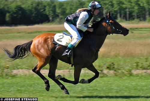 20020818_D_2 Arabian D-pony at Göteborg Galopp by ratexla.