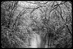 IceStorm09-15 (chuck.heeke) Tags: kentucky icestorm louisville january2009