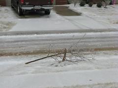 1/27/09 (LlamaGodS) Tags: tree broken kentucky ky icestorm vinegrove