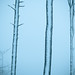 trees in the cold by gottofr