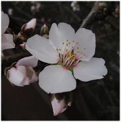 spring_whammy