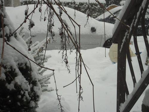 Christmas 2008 snow