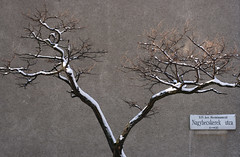 Nagybecskerek utca (sonofsteppe) Tags: street city winter urban white black detail tree art wall 50mm grey daylight mural hungary branch outdoor snowy background bare budapest explore simplicity series simple exploration streetname twiggy bough streetplate zenlike wallscape sonofsteppe pusztafia zugl utcatbla streetplatesofbudapest herminamez nagybecskerekutca urbanlifeoftrees