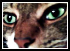 Kaleb eyes