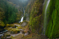 Multiple Wahclella Falls (Mike Hornblade) Tags: oregon waterfall moss gorge wahclellafalls