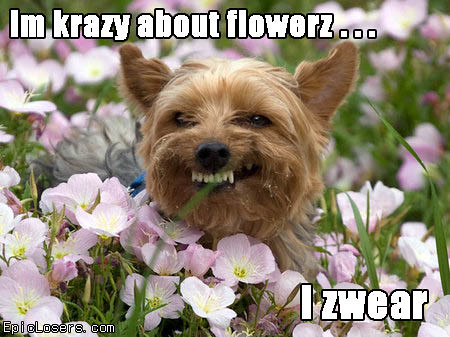 Im Krazy about flowerz - LOLDogs