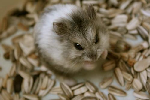 my hamster 4