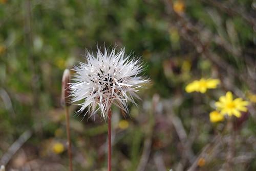Spiffy white flower