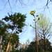 墓地の小さな花