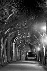 A bit creepy (Ignacio Lizarraga) Tags: trees bw night noche arboles bn paseo avenue zyber superaplus aplusphoto nikond90 vanagram