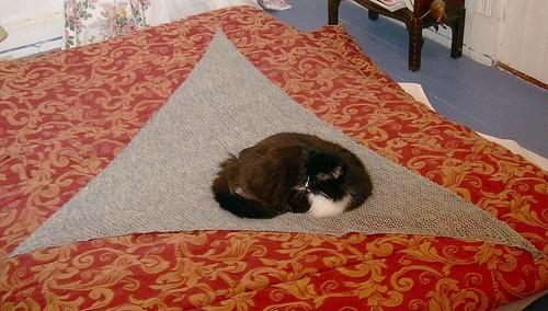 Cat on Shawl.
