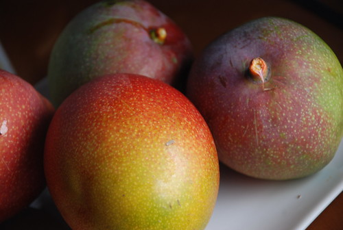 mangoes from the tree outside my window